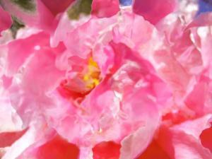 Blumen 15