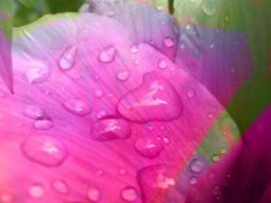 Blumen 16