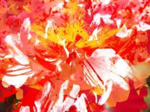 Blumen 19