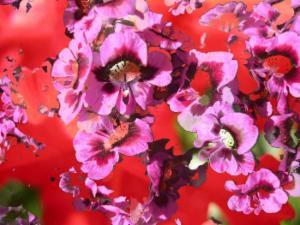 Blumen 23