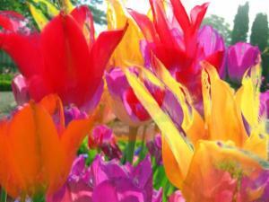 Blumen 25